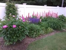 gardenbloom