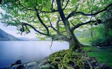 treebywater