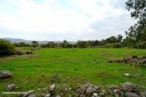 Plain-of-Bethsaida-